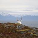 Rudolf za kamenem