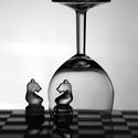Samota šachového koníka