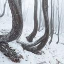 Zamrzlý les