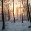 Zlatá zima