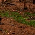 Prosincový les
