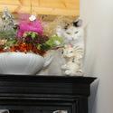 Koťátko na stráži
