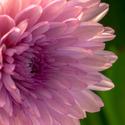 Květinka 1