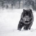 hypnotizující sníh :D