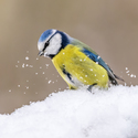 Na sněhu...