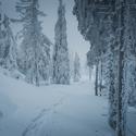 Mrazivý les