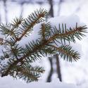 Pod pokrývkou sněhu
