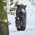 letošní zima v přírodě (5)