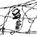 čierne na bielom: ...za plotom 2