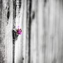 Plot kvetoucí
