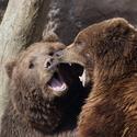 Medvědí rozhovor