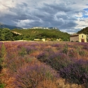 Provence I