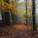 Les pod Zelenou horou II.