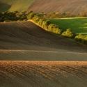 Na moravských polích