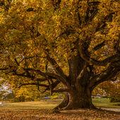 Podzim na zámku Kozel