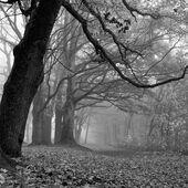 Cesta v mlze.