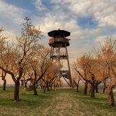 Mandloňová rozhledna a sady v Hustopečích