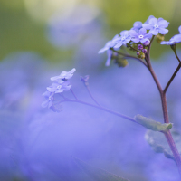 Modrá fantazie