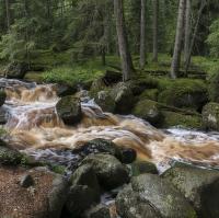 V lesích šumavských voda divoce plyne