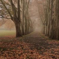 ...platany podzimní...