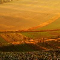 Ranní zlaté koberce Moravského Toskánska a jeden kříž s duchem krajiny