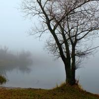 mlžný podzim