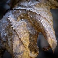 Chladný fragment