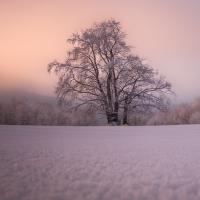 Růžová zima