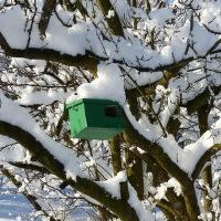 Ptačí budka na mirabelce v Zimě