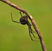 Pavoučí jistota