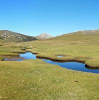 Korsická pastvina