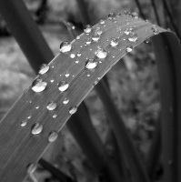 Poslední kapky po dešti
