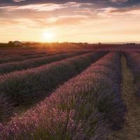 Večer v Provence