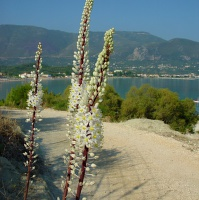 Květy Středomoří