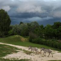 Večer před bouří