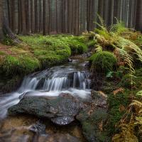 Bystřina v Českém lese