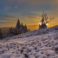 Vychod slunce za stromem