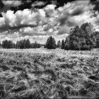 Ostré trávy