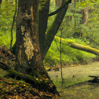 Lužní les VI - Přírodní rezervace Polanský les