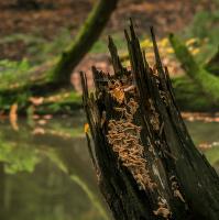 Lužní les IX - Přírodní rezervace Rezavka