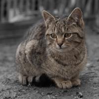 Jedna z našich kočiček