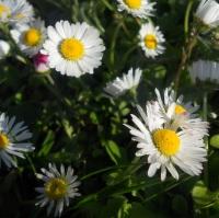 Farebná záhrada 2