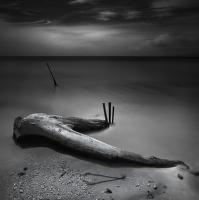 dřevěné kosti v zrcadle moře