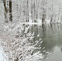 Zima na rybníku Milión.