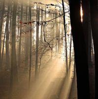 Sluneční paprskování