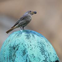 Ptačí kuličkové zátiší ...