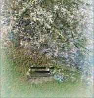 Pod kvetoucí jinovatkou