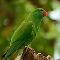 Papoušek2
