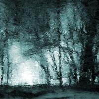 Zamrznutý les.
