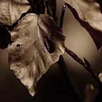 Suché listí